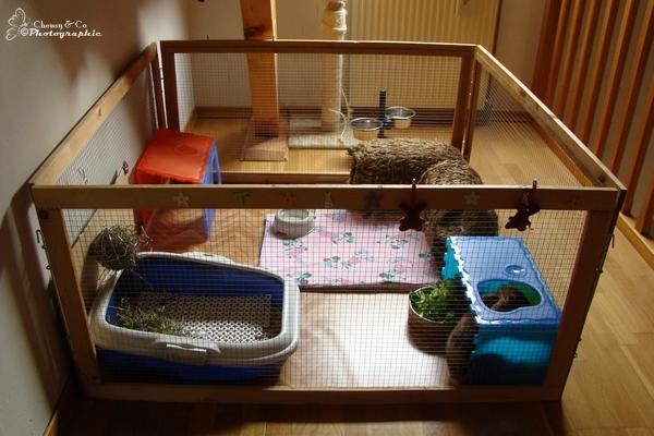 Enclos interieur pour lapin 28 images enclos pour for Cage exterieur pour lapin pas cher