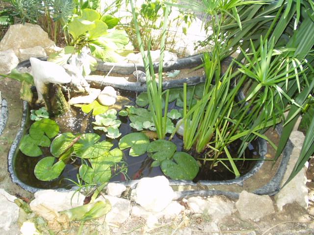 Enclos revu et corrig page 2 - Bassin pour tortue aquatique villeurbanne ...