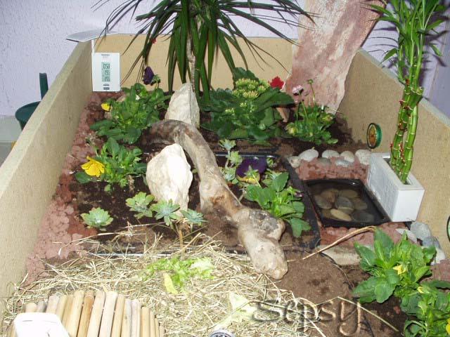 terrarium pour sulcata. Black Bedroom Furniture Sets. Home Design Ideas