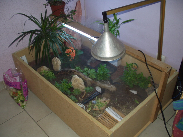 terrarium pour sulcata. Black Bedroom Furniture Sets. Home Design Ideas
