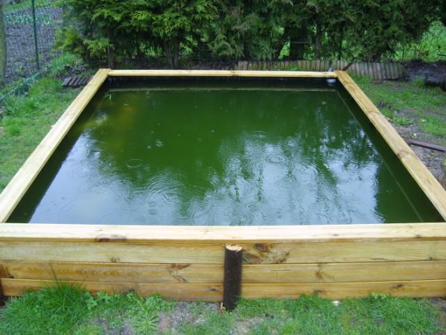 Le forum de passion bassin bassin de jardin baignade naturelle technique plantes aquatiques - Plantes oxygenantes pour bassin ...