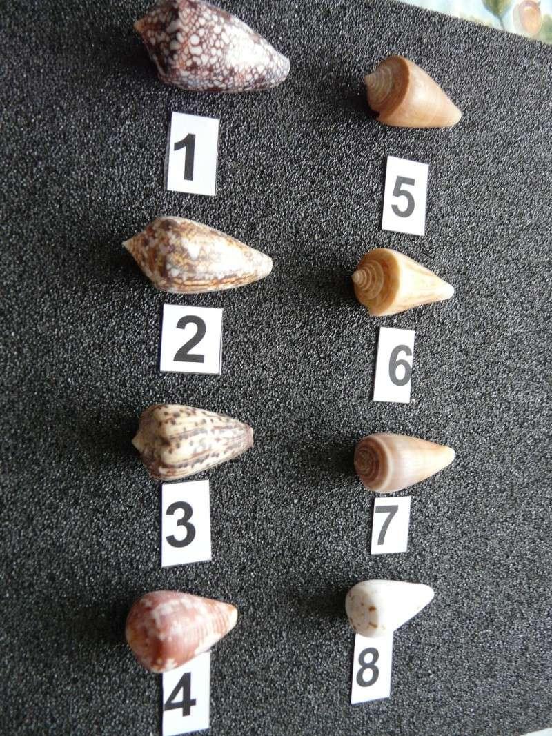 cones_15.jpg