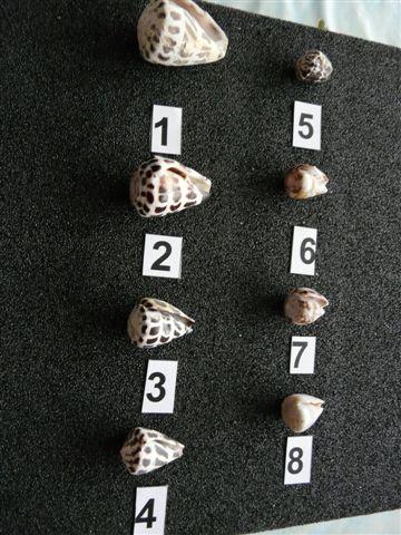 cones_21.jpg