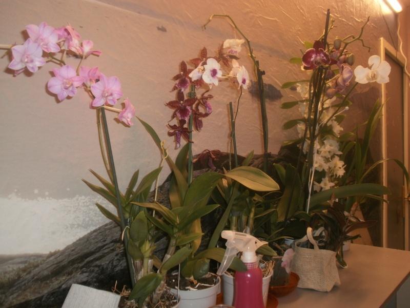 qqs orchidées dans pour le plaisir p9270113