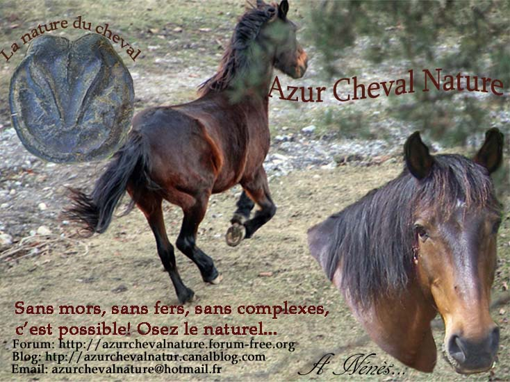 AZUR CHEVAL NATURE