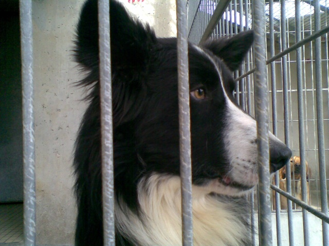 Border collie spa limoges 87 for Salon limoges