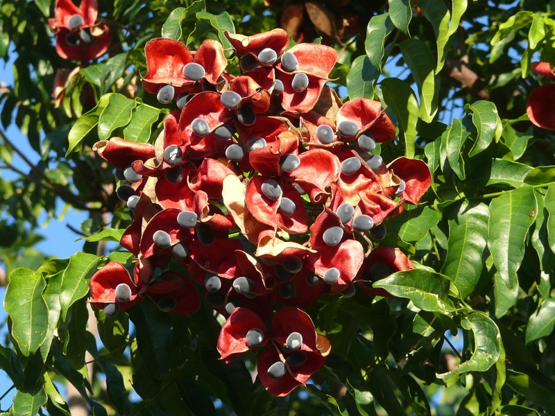 La perle de zanzibar quel nom exact pour cette esp ce for Plante zanzibar