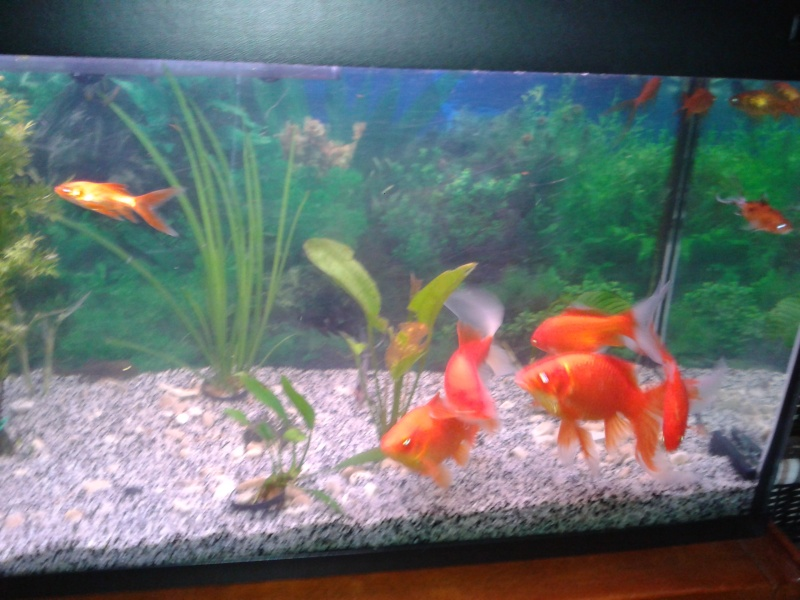 Aquarium rouge photos d aquarium page 34 animalerie en for Vente de poisson rouge 75008