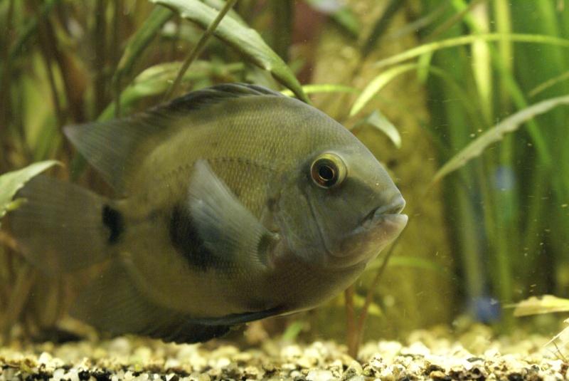 Un nouveau poisson a la maison for Bac a poisson 2000l