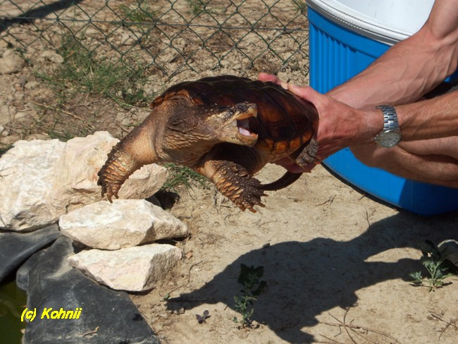 Bassin exterieur tortue bassin extrieur labge with bassin for Bassin aquarium exterieur