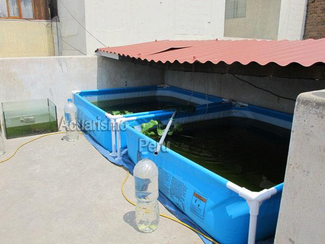 Criadero de rafael melendez armonia acuatica for Criadero de peces ornamentales