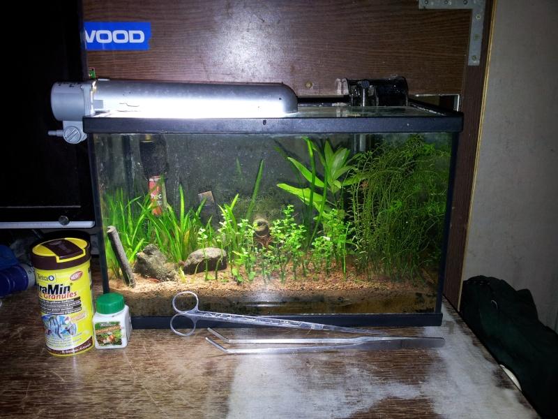 Vends aquarium 20l quip red cherry anentome helena 75 for Filtre aquarium 20l