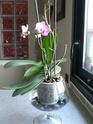 Conseils pour les Orchidées P1040213.jpg