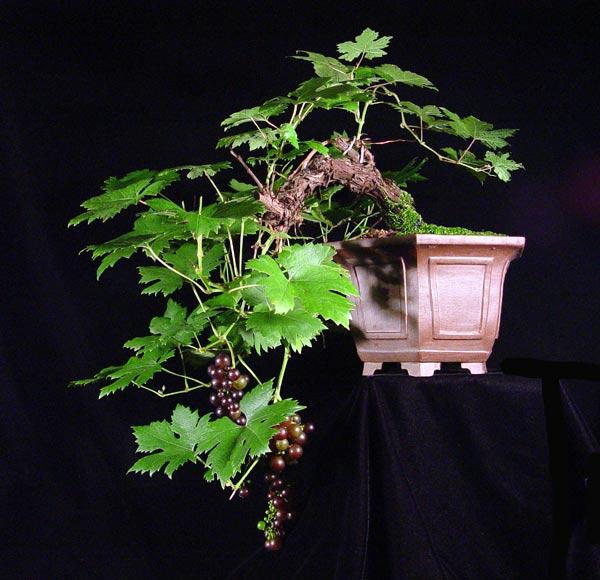 grape810.jpg