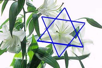La fleur de lys et l 39 etoile de david - Signification de la fleur de lys ...