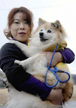 Zoologie Pusuke chien bâtard Japon Guiness des records Yumiko Shinohara décembre 2011 canidé canin forum